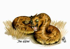 Das-Adder - These hybrid monsters live in South Africa, and apparently have heads that resemble a hyrax (a type of small mammal). Its snake-like eyes can hypnotise victims, but the monsters can be killed by decapitation.