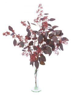 Roter Eukalyptus mit kleinen Beeren der Sorte 'Populus'. Eukalyptuszweige machen sich hervoragend zusammen mit anderen Schnittblumen oder solo in der Vase. Jetzt mehr entdecken auf Blumigo.de! Ganzjährig Saison im Januar, Februar, März, April, Mai, Juni, Juli, August, September, Oktober, November und Dezember. #blumen #rot #beiwerk #bindegrün #hochzeitsblumen #hochzeit #hochzeitsdeko #weddingflowers #eukaylptuszweige