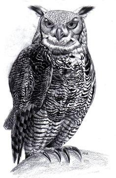 Great Horned Owl by Tristan-Despero.deviantart.com on @deviantART