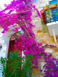 Bougainvillea is an option above the patio. comes in many colors. Bougainvillea, Outside Living, All Nature, Vacation Places, Belle Photo, Landscape Architecture, Garden Landscaping, Planting Flowers, Beautiful Places