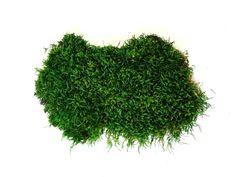 Стабилизированный плоский мох Green Ecco Moss