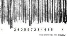 Kod leśny