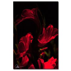 'Gladiolus VI' by Martha Guerra Photographic Print on Canvas