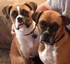 Harley and Bruiser (brothers)