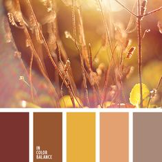 The color palette number 1060 Nina Panina, pale orange, yellow and orange, golden yellow, brown, honey-colored, orange-peach color, shades of brown, pastel shades of brown, red-brown,