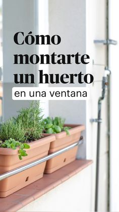 Sun Plants, Green Plants, Potted Plants, Home Vegetable Garden, Home And Garden, Planting Vegetables, Green Garden, Green Life, Plant Care