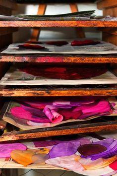 Petales de soie teints mis à sécher sur des claies en bois