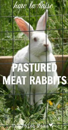How to Raise Pastured Meat Rabbits | The Paleo Mama