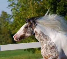 Awesome Long Manes Horses vLearn about #HorseHealth #HorseColic http://www.loveyour.horse