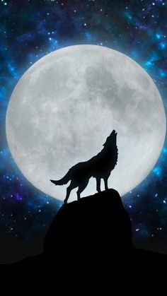 Wolf wallpaper by whitewolf11357 - 70cf - Free on ZEDGE™