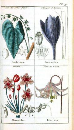 Botanique de la Jeunesse