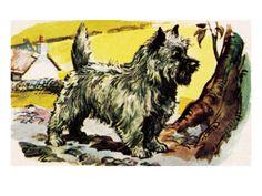 Cairn Terrier Giclee Print at Art.com  $50