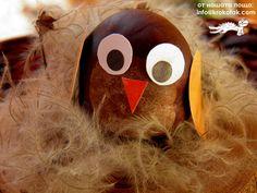 chestnut owl-so simple