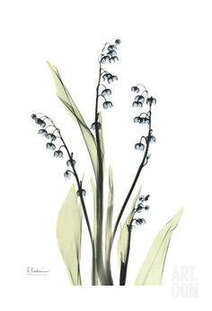 Lily of the Valley in Bloom • Albert Koetsier