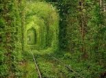 Located near a town all Kleven in Ukraine, this 1.8 mile long tree covered tunnel is part of a private railway for trains delivering wood to a local factory.  It has come to be called the Tunnel of Love