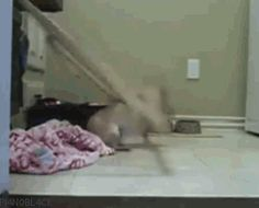 This dog who thought he could outsmart the gate. | 31 Biggest Dog Fails Of 2013