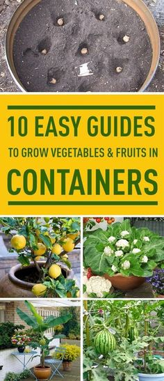 Don't have a garden? No problem. Follow these easy guides to grow various vegetables and fruits indoors. #GardeningDIY
