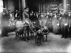 Школа боевых псов.В 1917 году англичане открыли первую в мире официальную школу-питомник для выращивания боевых собак. Выпускниками War Dog School стали более 7000 псов, большая часть которых пошла служить в армию и полицию.