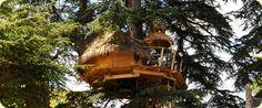 Cabane dans les arbres: la cabane des énigmes / the Enigma Treehouse.