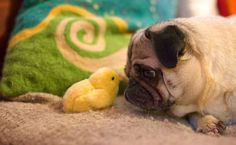 cute animals oo 5 Daily Awww: These animals have the cutest qualities (36 photos)
