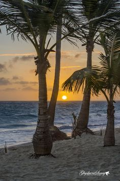 ~~Sunrise amongst the Palms ~ Punta Cana, Dominican Republic by gigi50~~