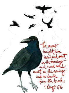 God provides all our needs....they just might be in the most mysterious ways 1 Kings 17, Adonai Elohim, Crows Drawing, Bible Illustrations, Crows Ravens, Jewish Art, Favorite Bible Verses, Praise God, Bible Art