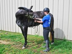 Seasoned sport horses often need a little extra TLC to continue performing well into middle age. #horses #horsehealth #TheHorse