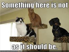 Cats Sits ... One thing is Not like the Others.
