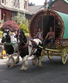 Gypsy horse Society