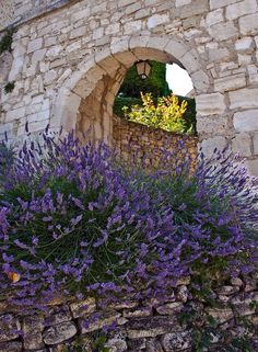 Lavender on stone wall