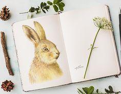 "Check out new work on my @Behance portfolio: ""Rabbit"" http://be.net/gallery/38630917/Rabbit"