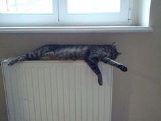 Poznajcie naszą firmową kotkę, która lubi się rozgościć na korytarzach :) Nazywa się Ejcia i jest bardzo przyjecielska.