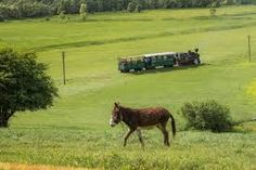 Imagini pentru mocanita agnita sibiu Steam Locomotive, Horses, Animals, Animales, Animaux, Horse, Animal, Animais, Dieren