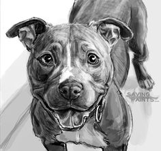 Sketch Pitbull 0418162 by saving-paints.deviantart.com on @DeviantArt