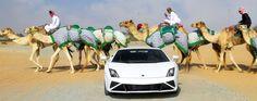 Dubai Holidays - Book Dubai Tour Packages from Kuwait 2029 / 2021 travel packages at Sabsan. this tour & holiday Packages can be customized. Dubai Attractions, Dubai Activities, Desert Safari Dubai, Dubai Tour, Dubai Holidays, Fun Deserts, Dubai Travel, Camels, Lamborghini Gallardo