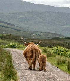 In The Highlands
