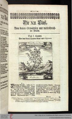 1719 - Valentini, Michael Bernhard - Viridarium Reformatum,