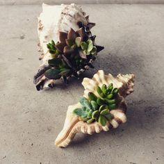 como-usar-conchas-de-moluscos-en-jardineria-09