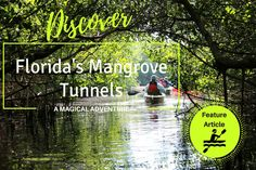 Adventure into the mystical, magical world of Florida's Mangrove Tunnels and experience Florida's unique ecosystem while admiring wildlife above and below the canopied waterways. Florida Vacation Packages, Florida Travel, Florida Keys, Bradenton Beach, Sarasota Florida, Sarasota Jungle Gardens, Marco Island Florida, Florida Girl, Vacation Places