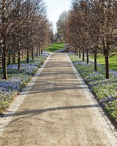 Blues in Bloom....Martha Stewart's home/farm her infamous river of blues driveway. Famed Dutch landscape architect...Jacqueline van der Kloet
