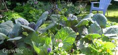 Whether you're starting a new garden or improving an existing one, using dedicated beds to grow your vegetables in can help you to maximize your productivity. A simple bed system will help you to plan, tend and harvest your crops with ease, yielding results to be proud of.Read on to find out how to lay beds out within a garden, and the best ways of deciding what to grow where.