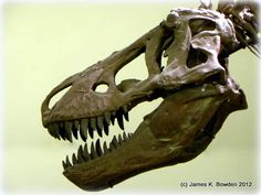 A T-Rex Skull as viewed in the American Museum of Natural History, New York City, New York.