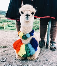 Really cute fashion lama with fluffy colorful pompoms. Cute Creatures, Beautiful Creatures, Animals Beautiful, Cute Little Animals, Cute Funny Animals, Cute Puppies, Cute Dogs, Tier Fotos, Hilarious Animals