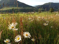 Bauernhofurlaub Österreich Landurlaub in den Bergen