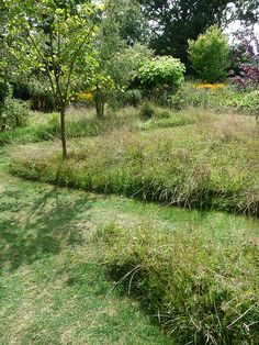 Create nature highways and byways - Let some of your lawn grow longer. Voles, shrews, frogs, toads, beetles and hedgehogs like to move through long grasses rather than out in the open.