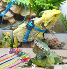 Generic Adjustable Reptile Lizard Harness Leash Adjustable Multicolor Light Soft Fashion (Green) - http://www.petsupplyliquidators.com/generic-adjustable-reptile-lizard-harness-leash-adjustable-multicolor-light-soft-fashion-green/