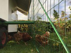 Chicken coop tractor