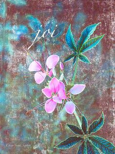 Joi Hope Peace Pink Cleome Oriental Flair by CheyAnneSexton