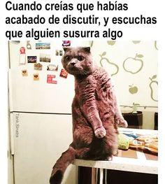 Para hombres camiseta señoras Gracioso Gato Gatito el hogar es donde el gato es comedia Kitty