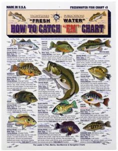 fish chart with info on how to catch them. fish chart with info on how to catch them. Bass Fishing Tips, Fishing Knots, Fishing Life, Gone Fishing, Kayak Fishing, Fishing Stuff, Fishing Basics, Fishing Tricks, Fishing Techniques